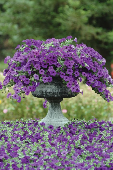 Image Result For Flower Bed Weed Control